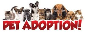 pet-adoption